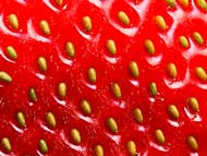 strawberry seeds