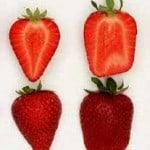 benicia strawberries