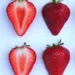 mojave strawberries