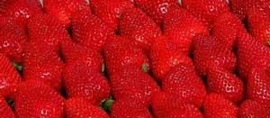 mojave strawberry plants