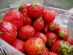 strawberry buying guide