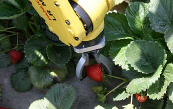 strawberry picking robot Strawberry Picking Robot