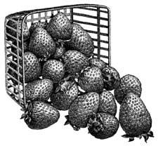 growing strawberries in missouri