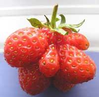 mutant strawberries