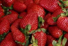 strawberry fisetin flavonoid roundup