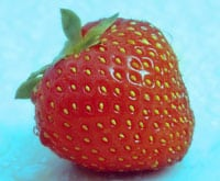 german strawberry varieties