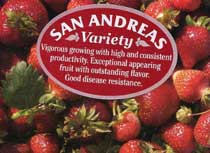 san andreas strawberries