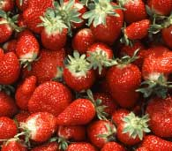iraqi strawberry success funded by usaid