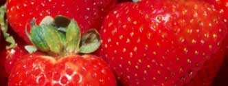 new standards released for strawberry plant nutrient sufficiency