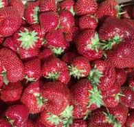 flavorfest strawberry variety