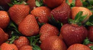 strawberry plant growers using math for success