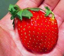 seeds germinating on strawberry