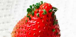 vivipary viviparous germination in strawberry