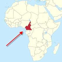 growing strawberries in cameroon africa