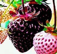 black strawberry seeds
