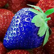 fake blue strawberry