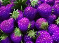 photoshopped strawberries