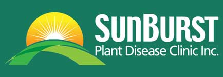 strawberry plant disease diagnosis