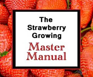 Strawberry Growing Manual eBook
