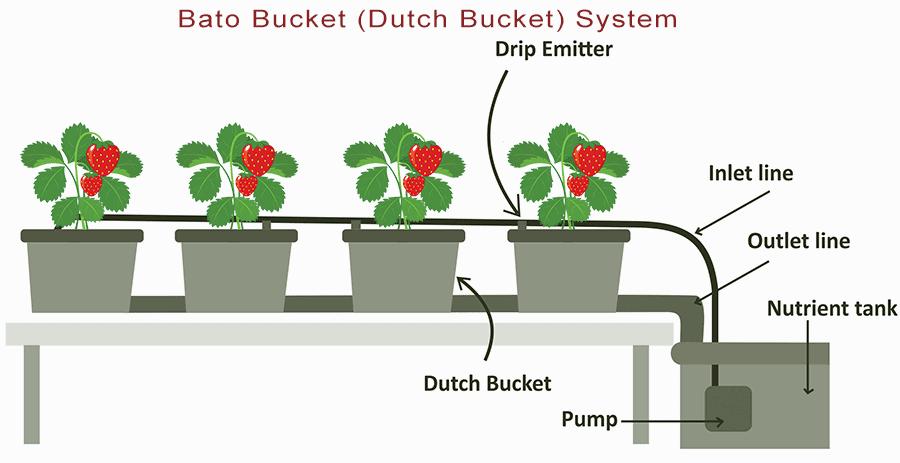 Dutch bucket hydroponics system